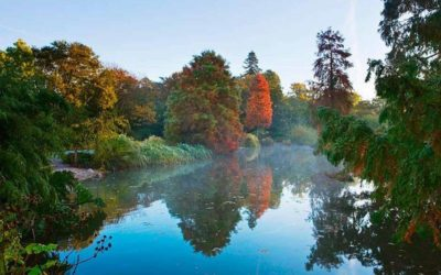 Save Wisley's trees
