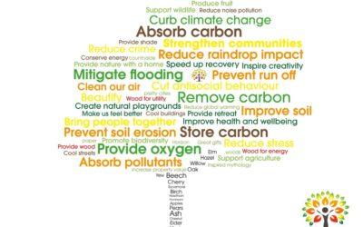The many MANY benefits of trees