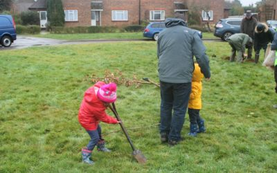 Tree planting while raining cats and dogs