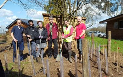 Planting a hedgerow