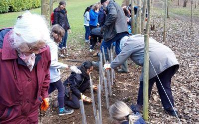 Inter-generational hedge planting