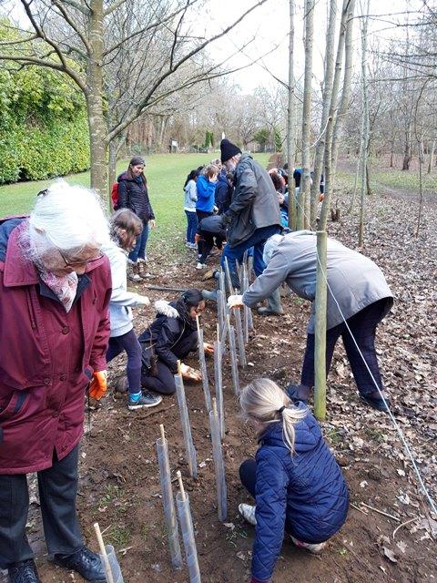 Inter-generational hedge planting
