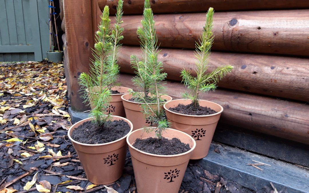 Little baby Christmas trees!